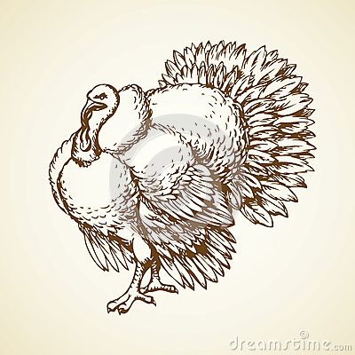Free Turkey. Vector Drawing Stock Photo - 68643830