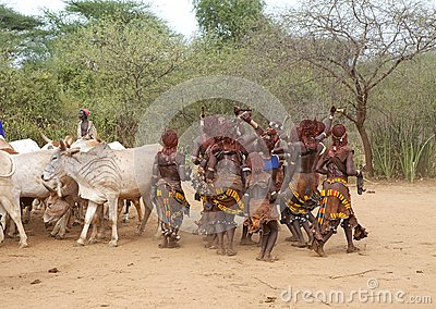 Jumping of the bull ceremony Ethiopia Editorial Stock Image