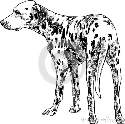 Turning Dalmatians Royalty Free Stock Photography - Image: 32713957