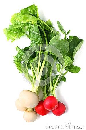 Free Turnip Royalty Free Stock Image - 19066826