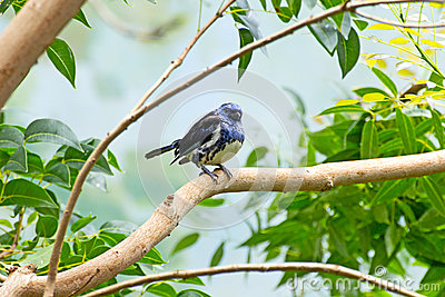 Turquoise Tanager Bird On Branch