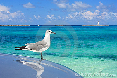 Turquoise waters of the caribbean sea a seagul