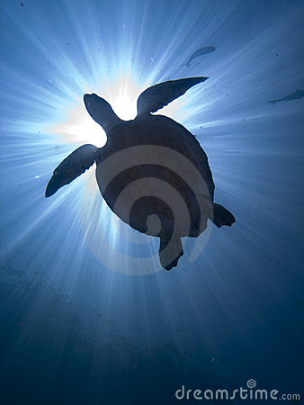 Free Turtle Stock Photography - 12228042