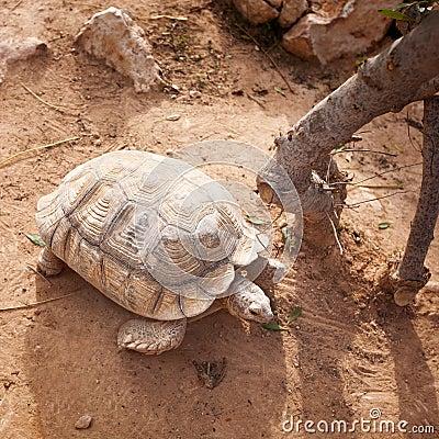 Free Turtle Royalty Free Stock Image - 37963466