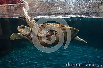 Turtle in Aquarium Cancun