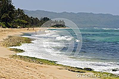 Turtle Beach (Laniakea), Oahu North Shore