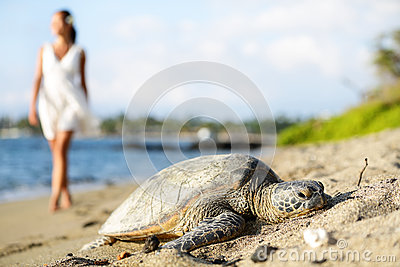 Turtle on beach, walking woman, Big Island, Hawaii