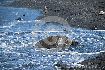 Turtle Crawling on Shore