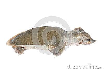 Turtle dead