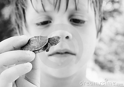Turtle discovery