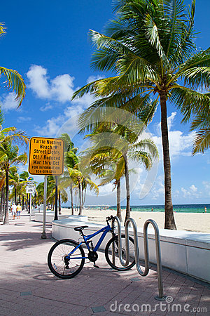 Free Turtle Nesting Beach, Fort Lauderdale, Florida USA Royalty Free Stock Image - 45807956