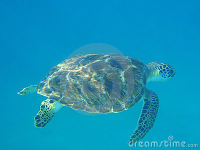 Turtle on seabed