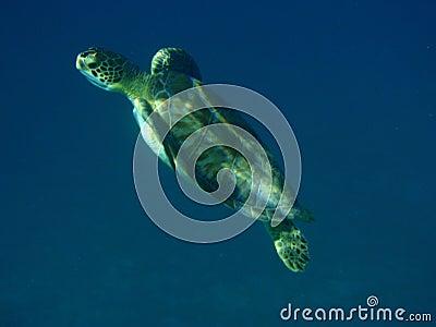 Turtle on seabed