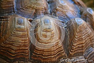 Turtle Shell Macro