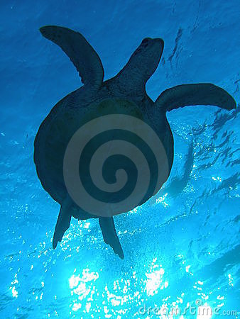 Free Turtle Sillhouette Stock Photo - 622360