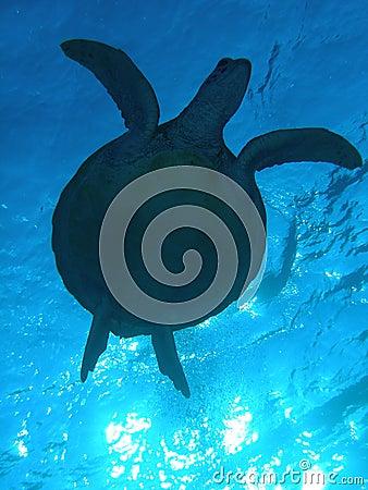 Turtle Sillhouette