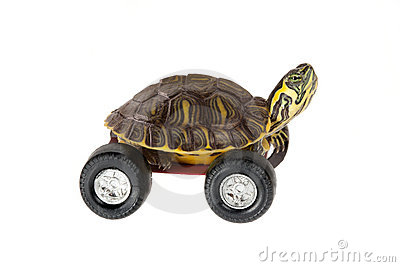 Turtle on wheels