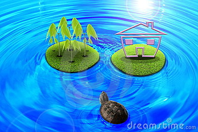 Turtles across the island.
