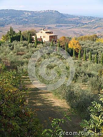 Tuscan Farmhouse &  Landscape6
