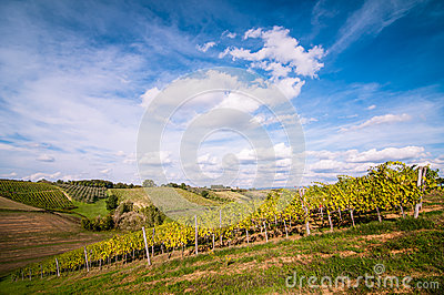 Tuscan grapevine countryside landscape