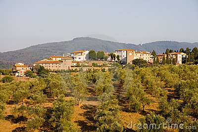 Tuscan town and olive trees