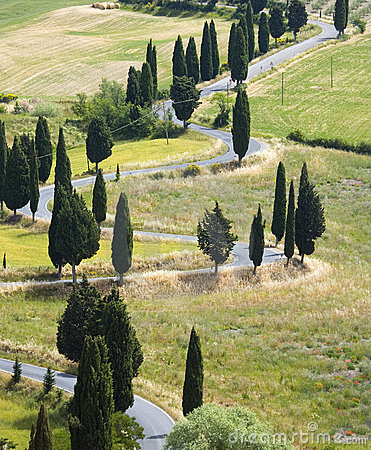Free TUSCANY Countryside, Devious Street With Cypress Stock Images - 6352804