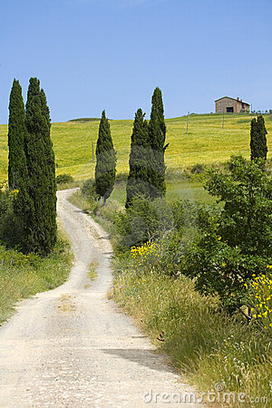Free TUSCANY Countryside, Devious Street With Cypress Stock Image - 6352831