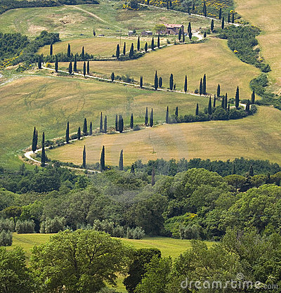 Free TUSCANY Countryside, Devious Street With Cypress Stock Photos - 6352853