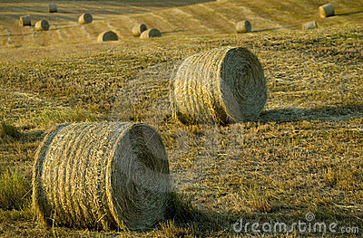 Tuscany countryside, hay-balls on the meadow