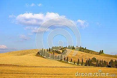 Tuscany, Crete Senesi farmland, cypress tree road, green fields. Italy.