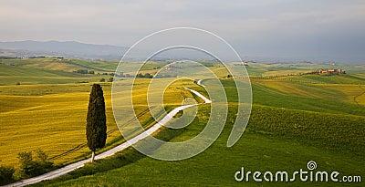 Tuscany - Cypress
