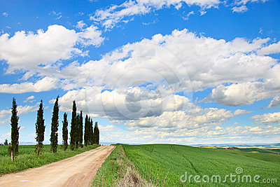 Tuscany, Cypress Trees, road, green field, Italy.