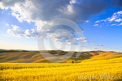 Tuscany, farmland, wheat and green fields. Pienza, Italy.