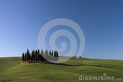 Tuscany Hills with Cypress Trees