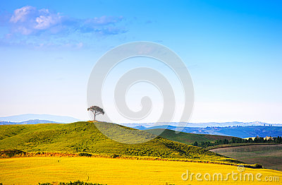 Tuscany, pine tree on hill and green fields. Siena Orcia, Italy.