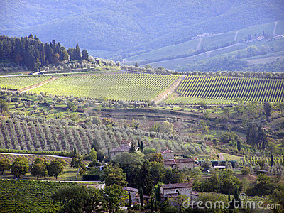 Tuscany vineyards - Italy