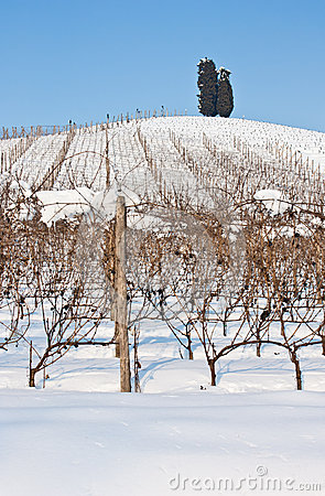 Free Tuscany: Wineyard In Winter Royalty Free Stock Image - 25123426