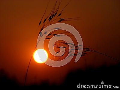 Tusq Sunset
