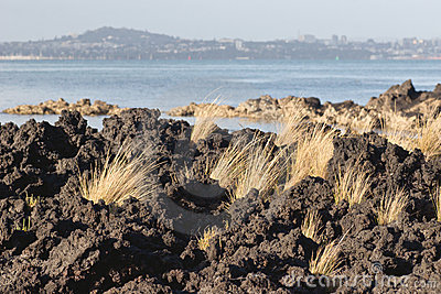 Tussock and Lava
