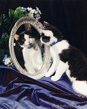 Free Tuxedo Cat Looking In Mirror Royalty Free Stock Images - 21368199