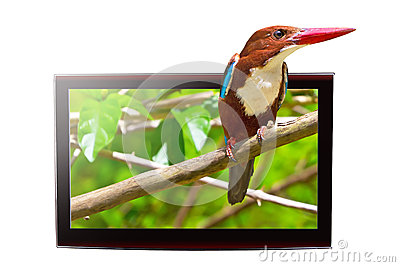 TV with 3D bird on display