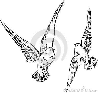 Två duvor