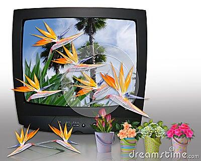 TV gardening show