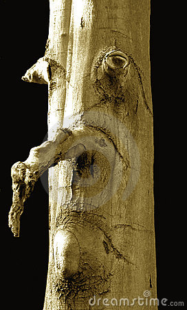 Twarz człowieka drzewo