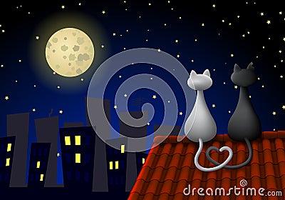 Twee katten op een dak