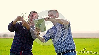 Twee landbouwer status op een tarwegebied en het bekijken tablet, onderzoeken zij corp bij zonsondergang Twee landbouwers op een  stock footage
