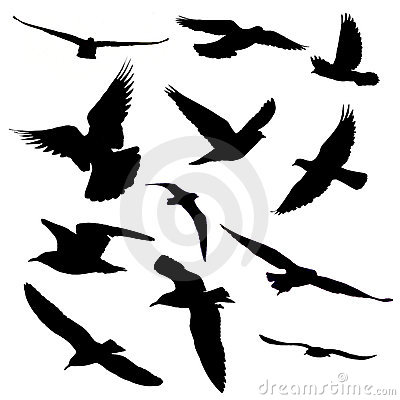Free Twelve Birds Silhouette Stock Photo - 15606550