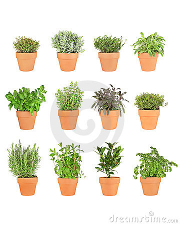 Twelve Herbs in Pots