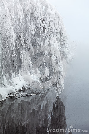 Winter beautiful tree over water