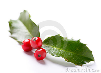 Twig of Holly